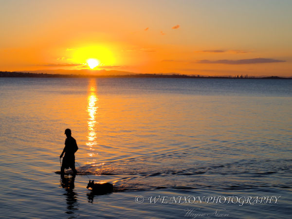sunset, man, dog, silhouette, ocean, reflection, landscape, photography