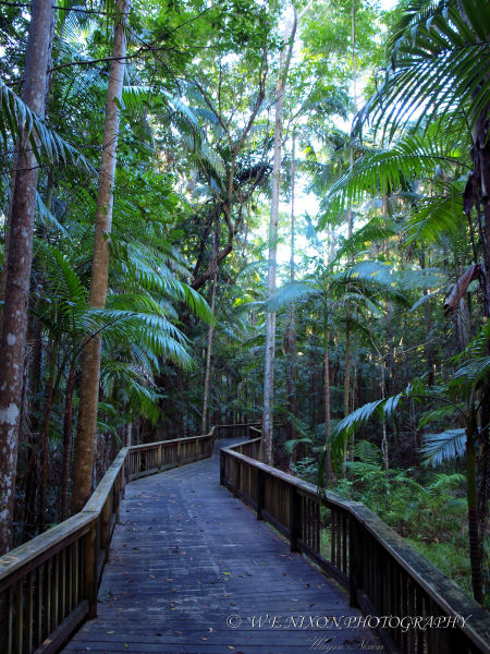 boardwalk, forest, palms, rain forest, landscape, photography