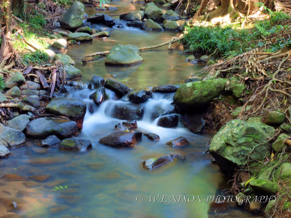 cascades, creek, rain forest, landscape, photography, long exposure