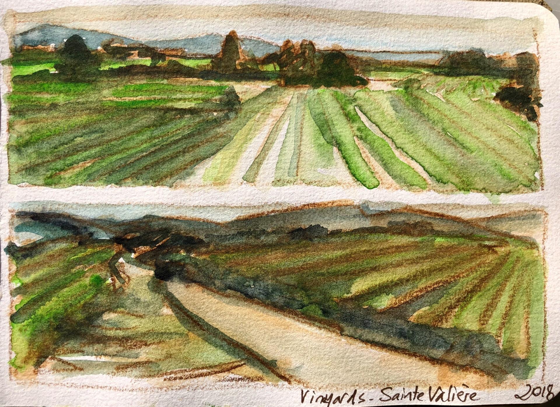 Vineyards Sainte-Valière