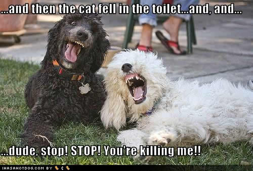 If dogs could talk?