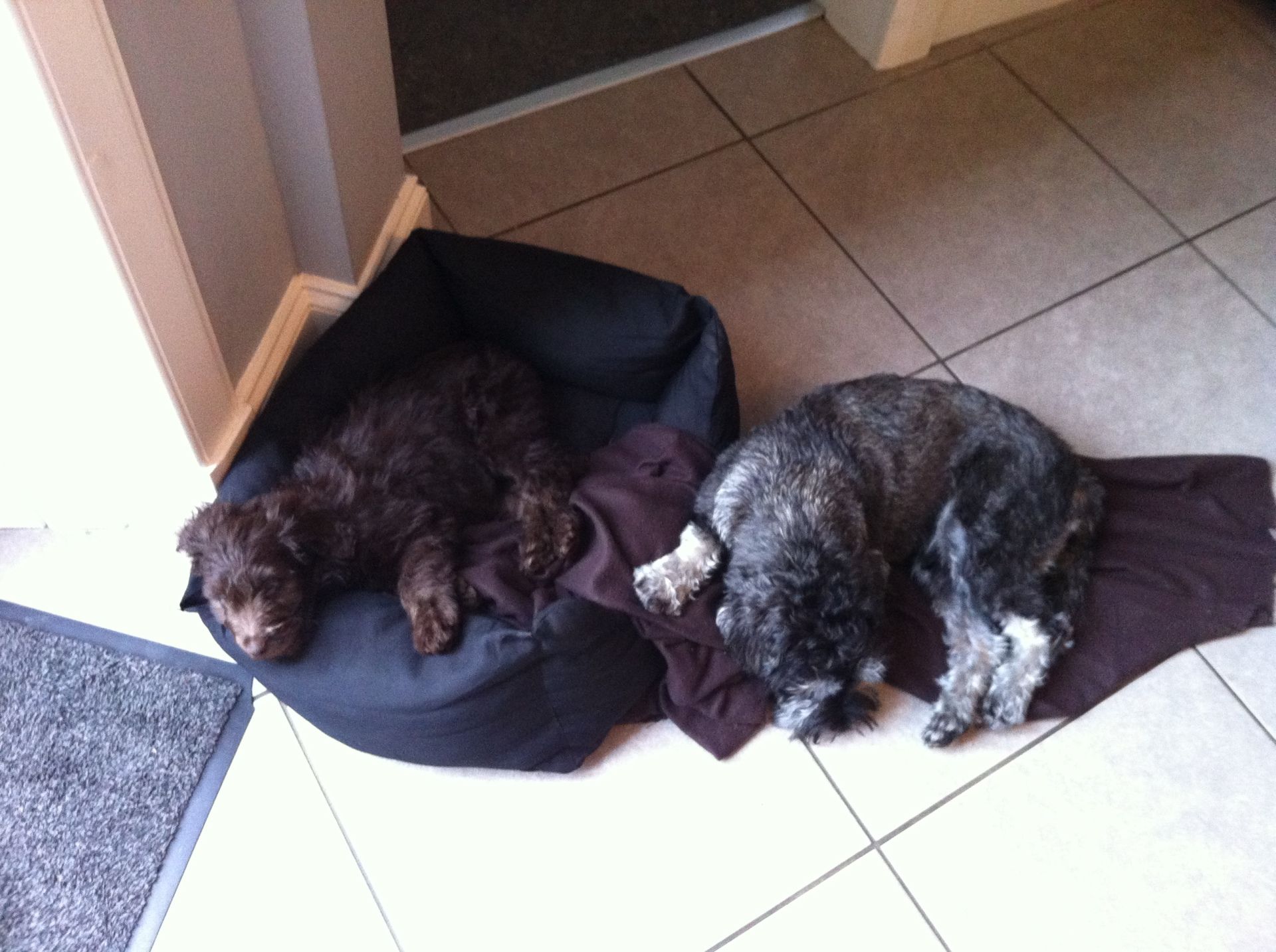 Ollie & Nelson, shattered after a walk