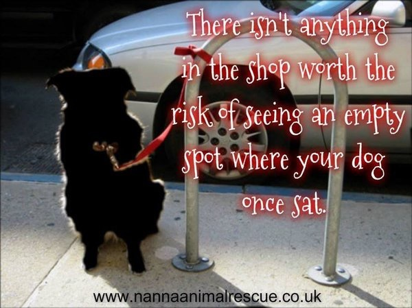 Out shopping? Think it's ok to leave your dog outside the shop? Think again.