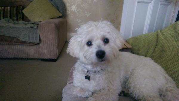 Winston....too cute