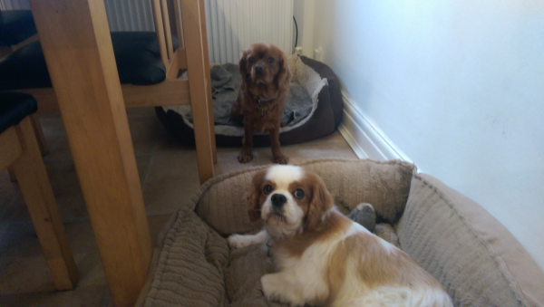 Toby & Barney...best mates ever
