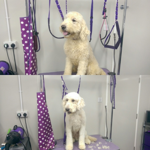 Benson - before & after groom