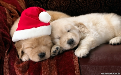 Christmas Puppy? The first few weeks are the most important...tips