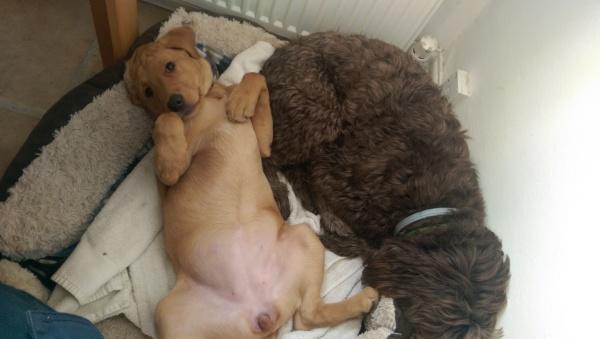 Copper & Ollie