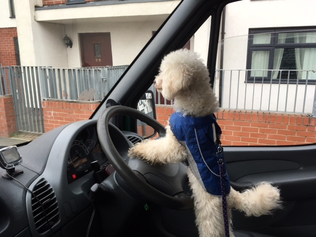 Charlie's Driving lesson!!