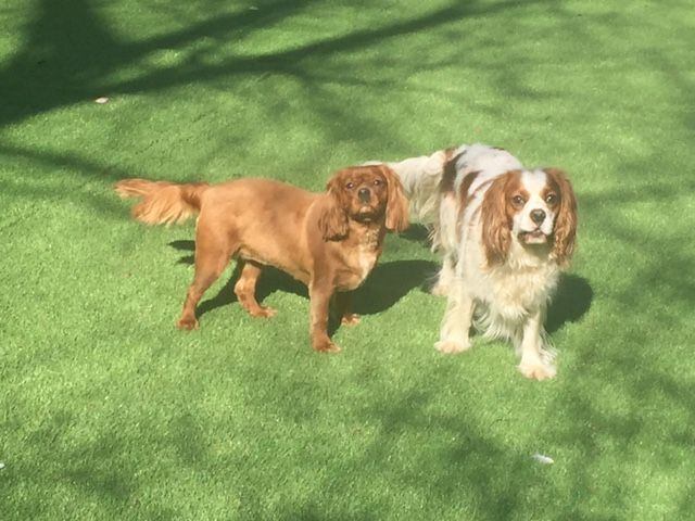 Toddy & Bella