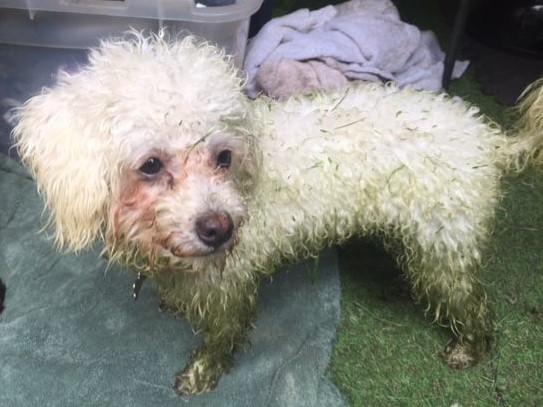 Freshly cut wet grass is not ideal for dog walking!!