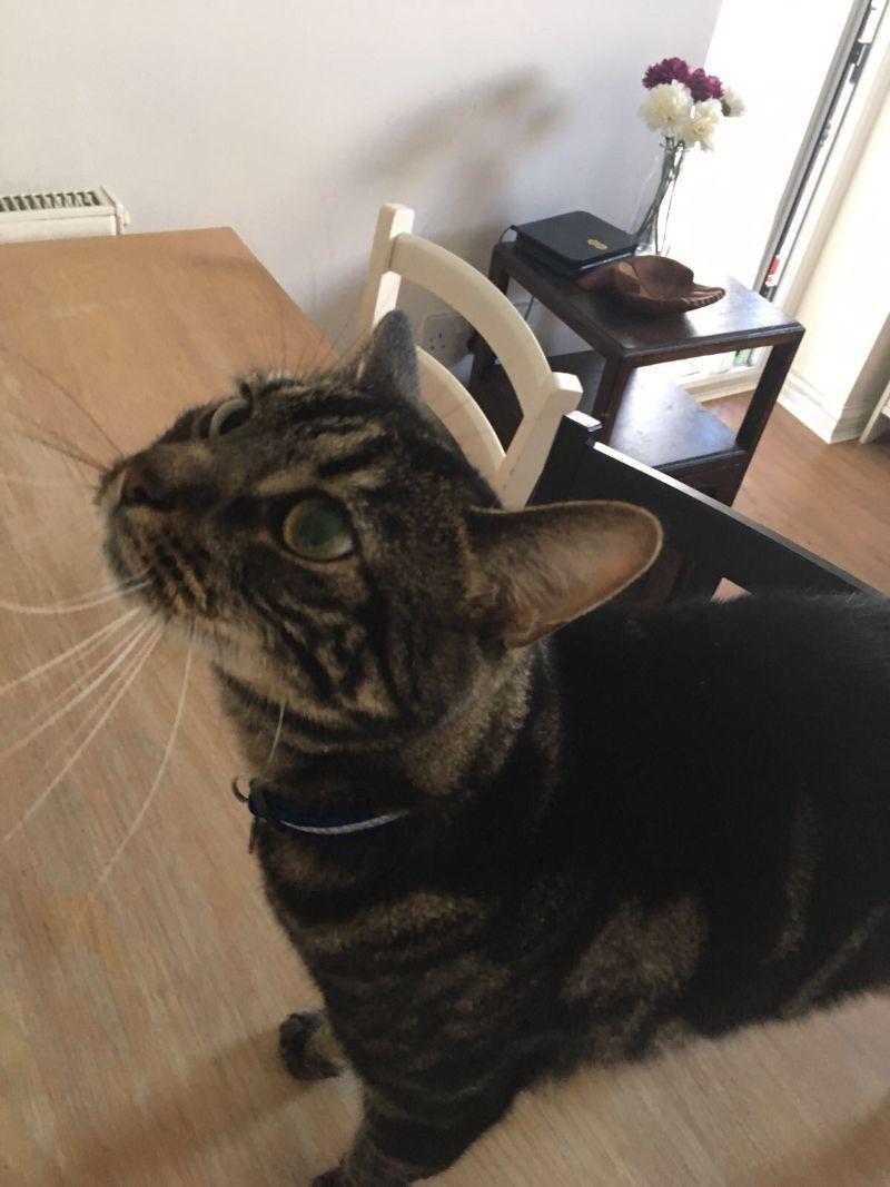 Jasper - my 2nd cat client!