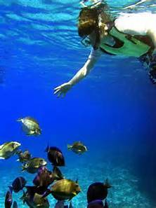 Snorkel/Dive