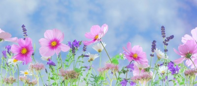 Seasonal Massage Special -      Spring Splendor