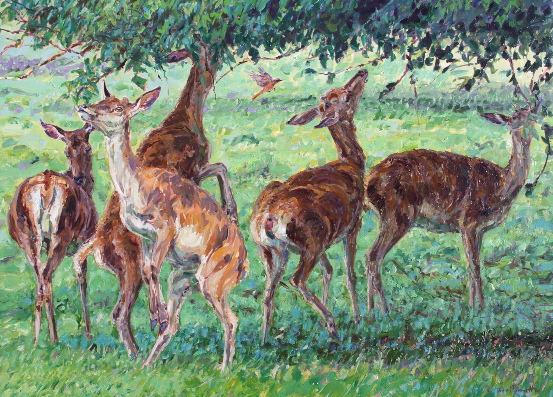Redstart and Red Deer Hinds, Studley Deer Park