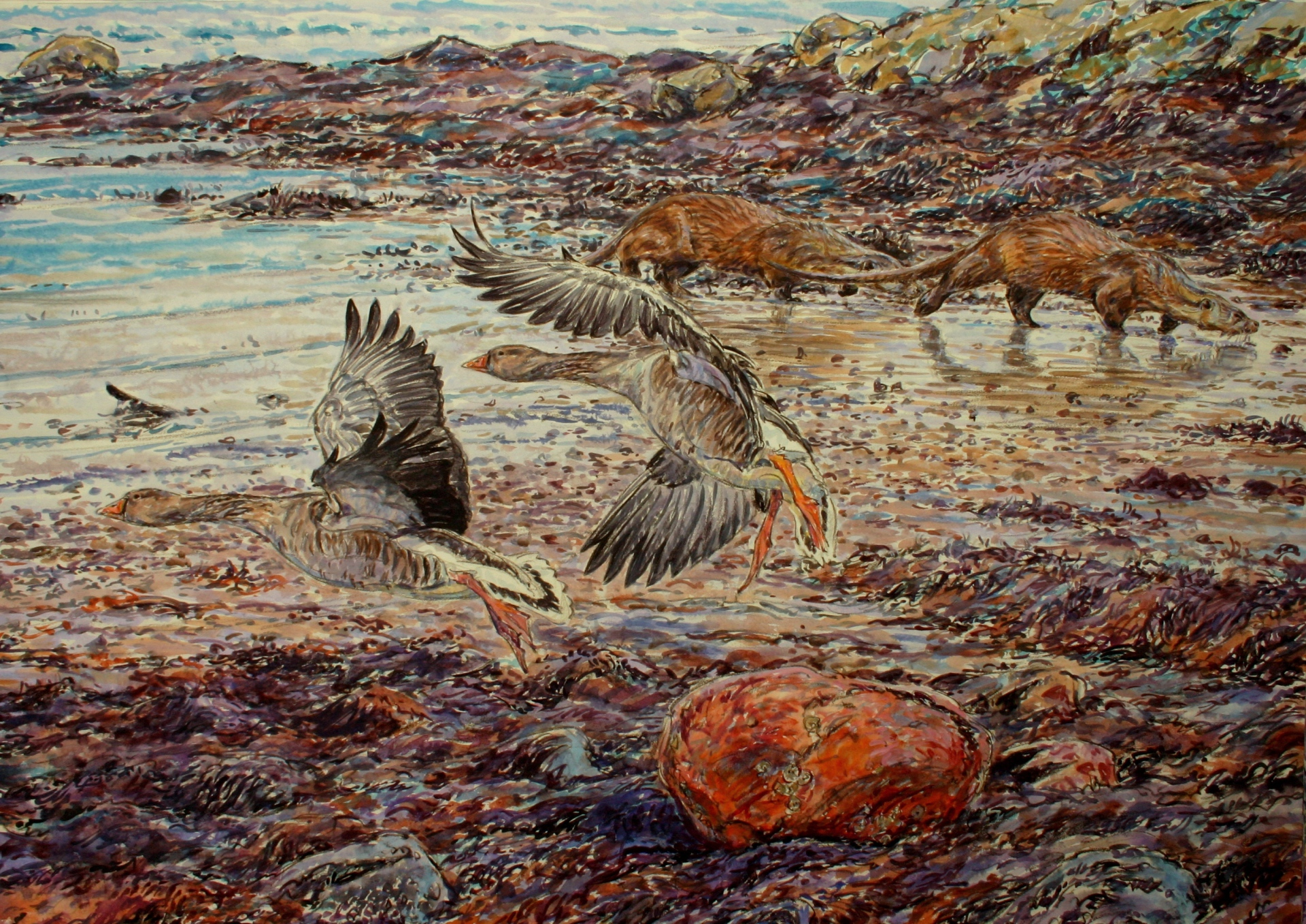 Otters and Greylags, Mull
