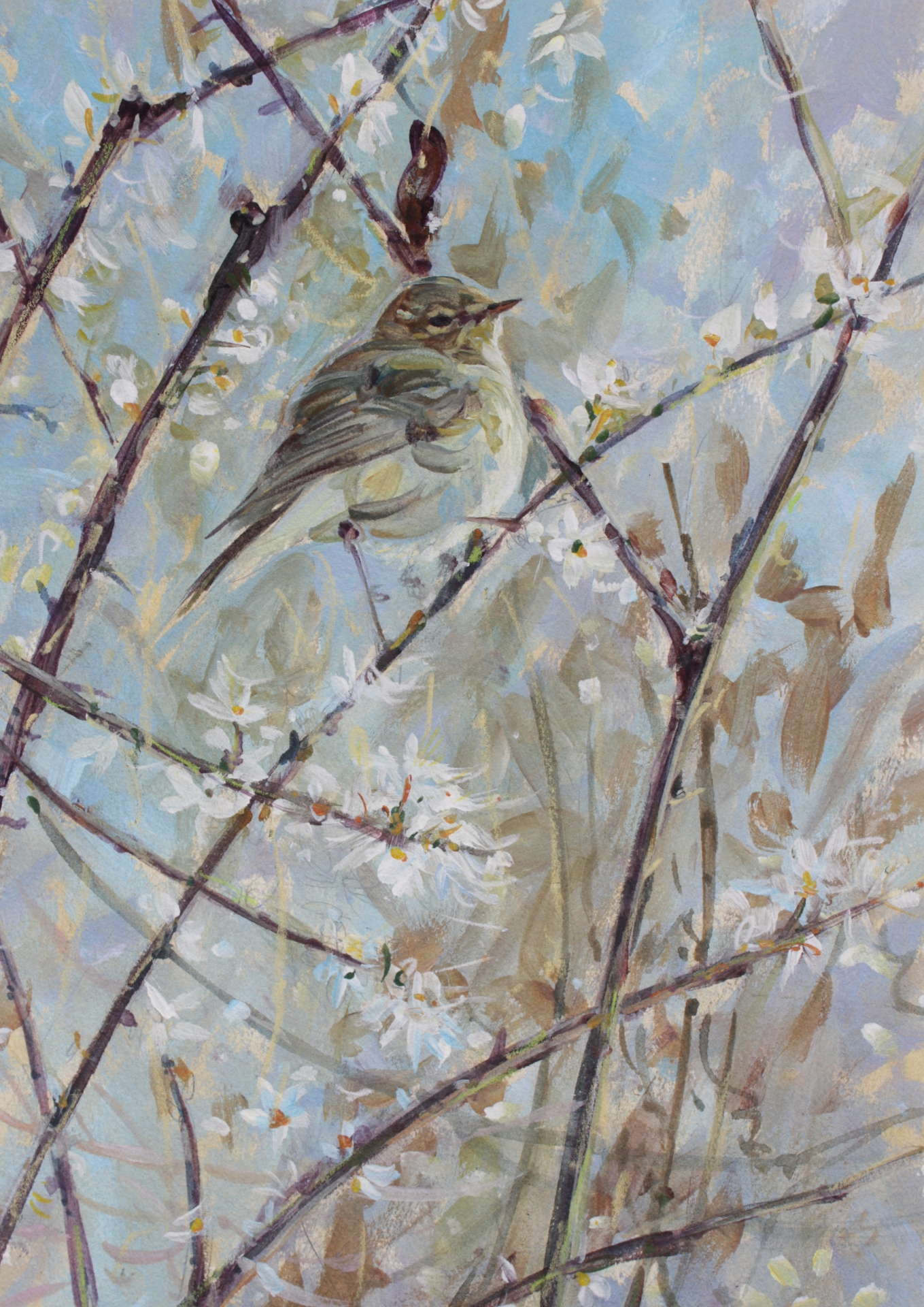 Willow Warbler in Blackthorn