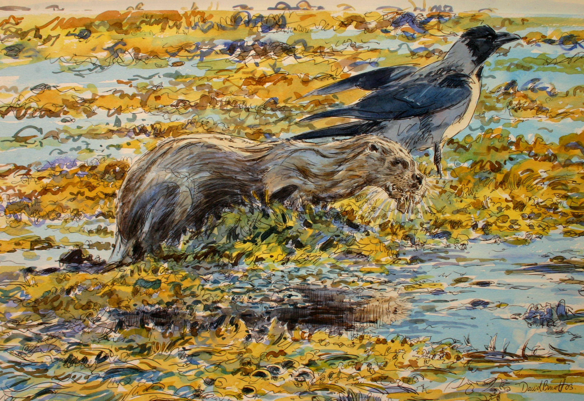 Otter and Hooded Crow, Mull