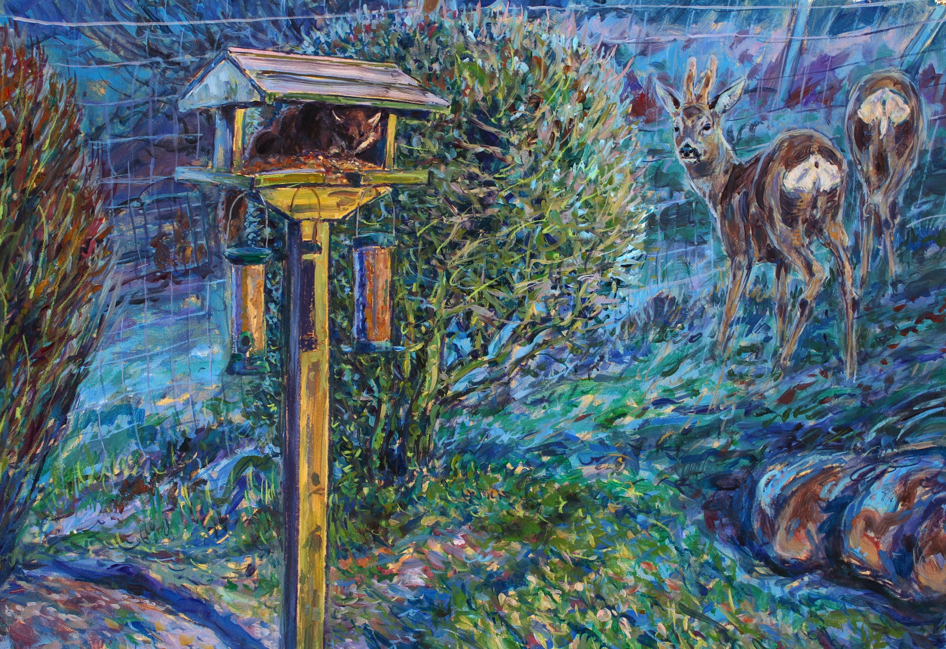 Roe Deer, Pinemarten and Feeder, Ardnamurchan