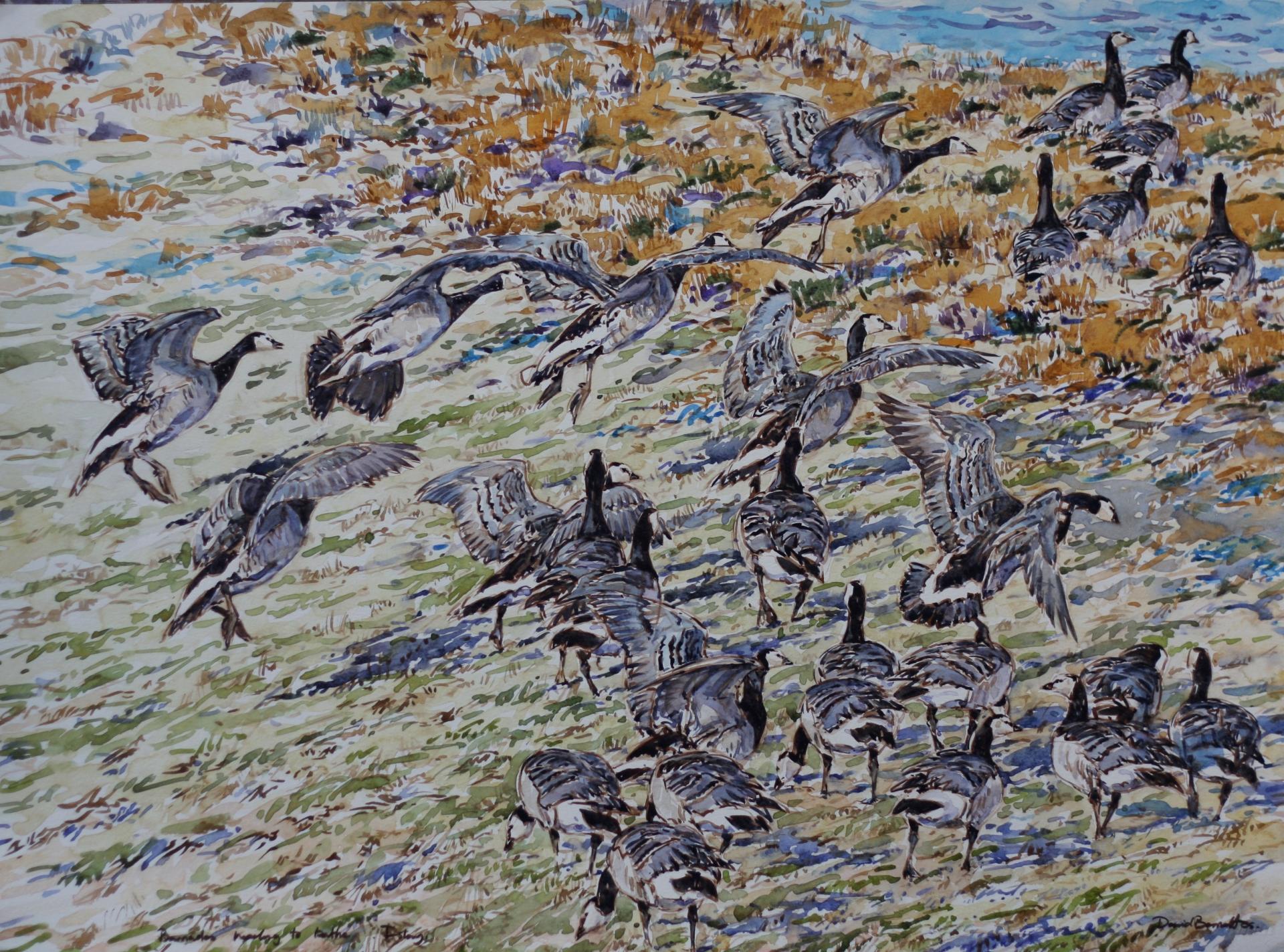 Barnacles Landing, Islay