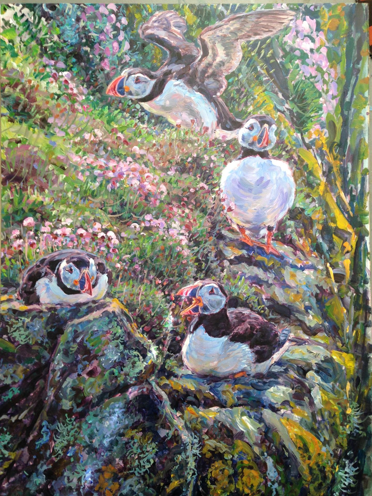 Puffins, Treshnish Isles