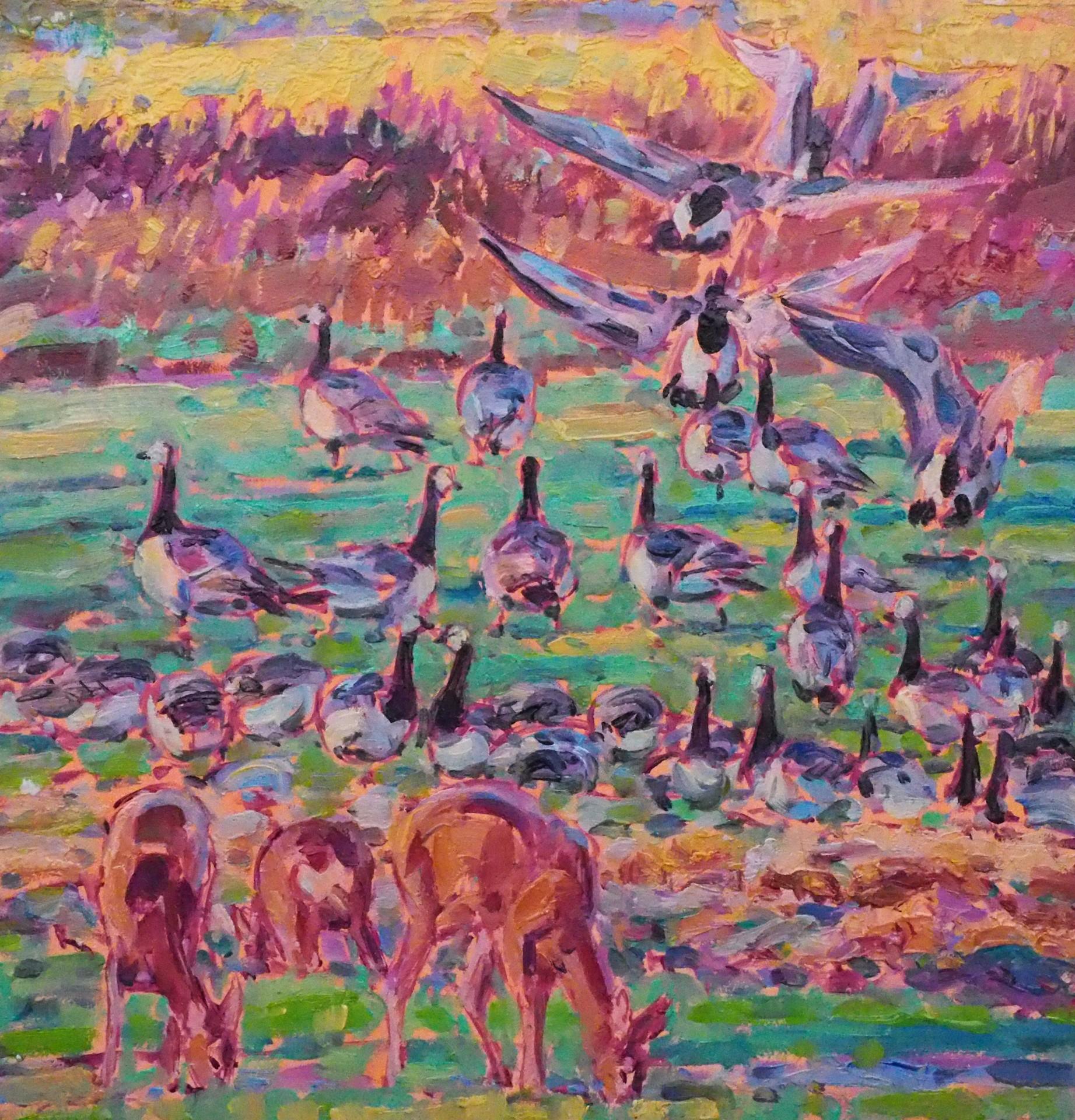 Landing Barnacle Geese and Roe Deer, Islay