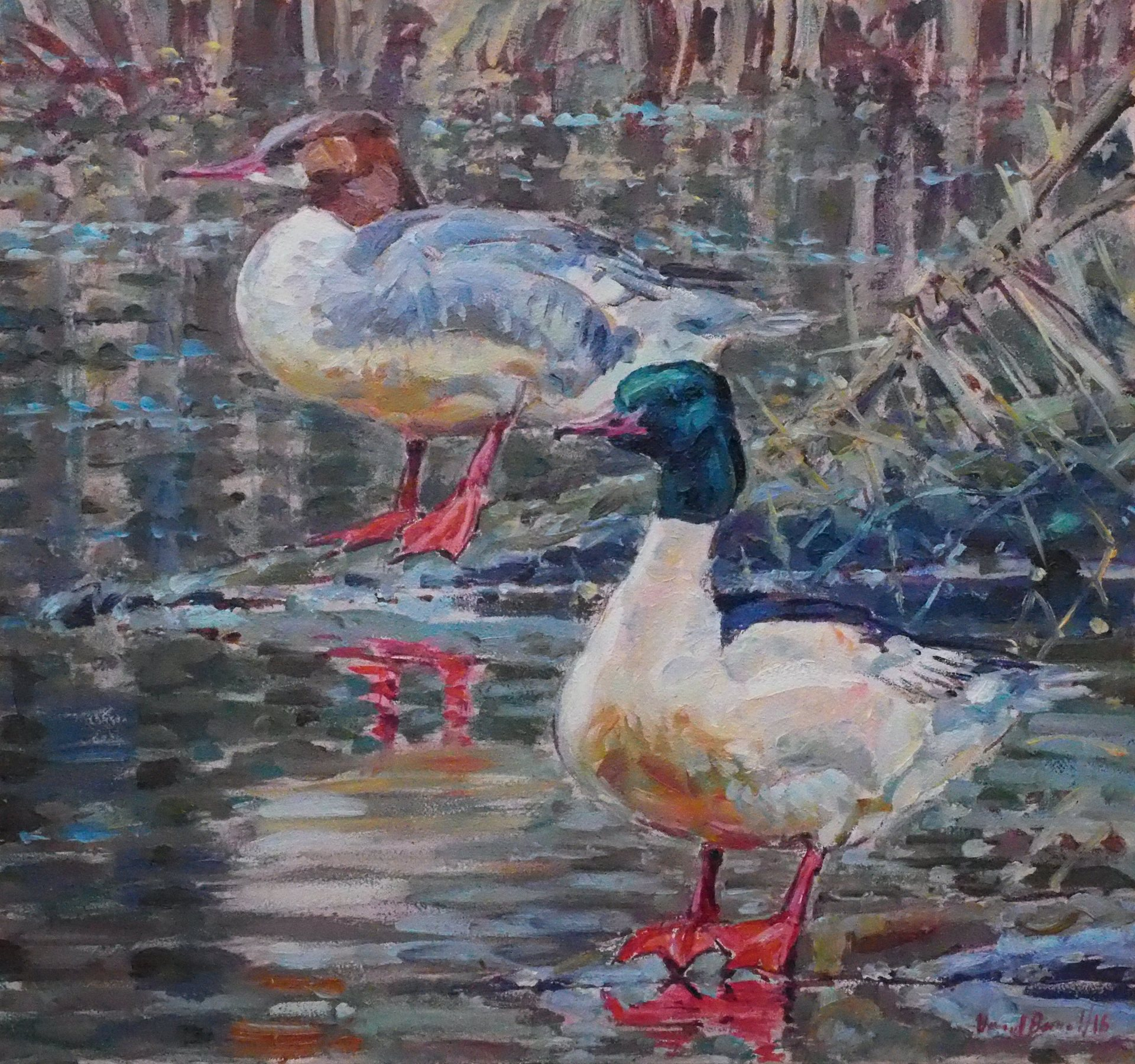 Goosander Pair, River Nidd, North Yorkshire