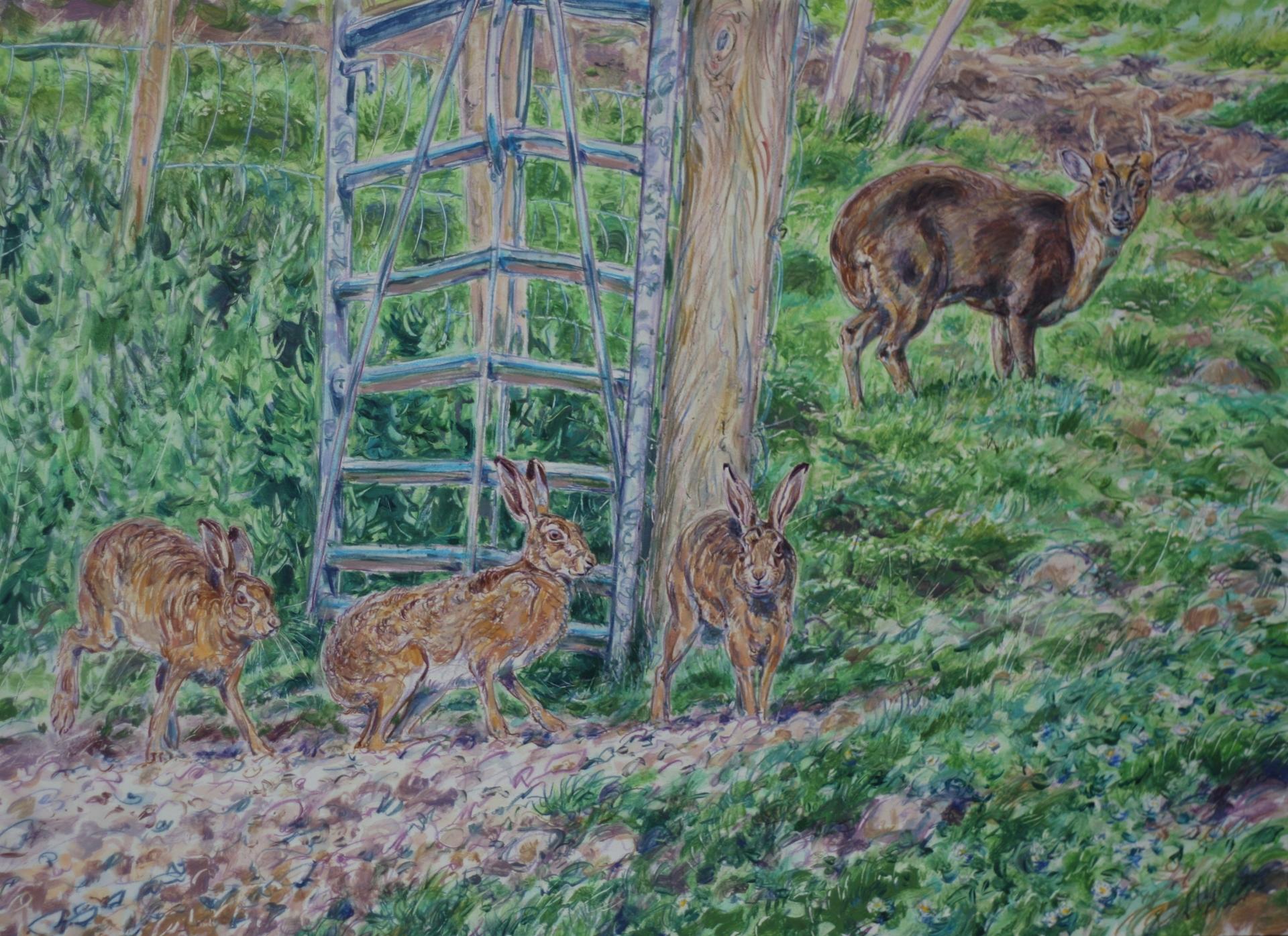 Hares and Muntjac Deer, Stumpshaw Marsh, Norfolk