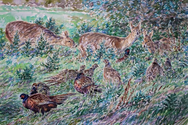 Chinese Water Deer and Pheasants, Stumpshaw Marsh, Norfolk