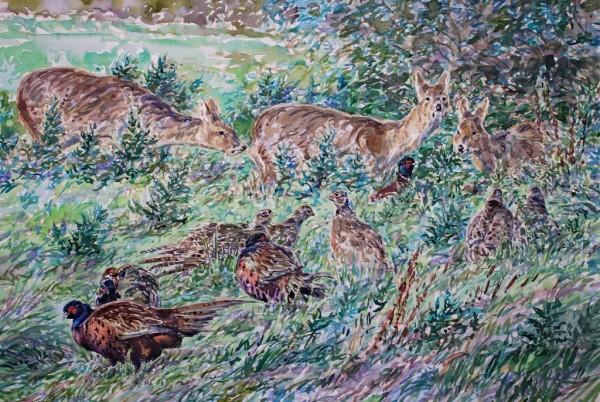Chinese Water Deer and Pheasants, Stumpshaw Marsh, Norfolk