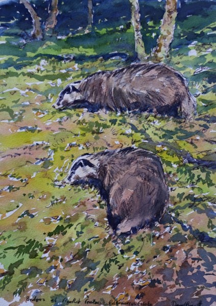 Badgers Feeding under Bird Table, Highlands of Scotland