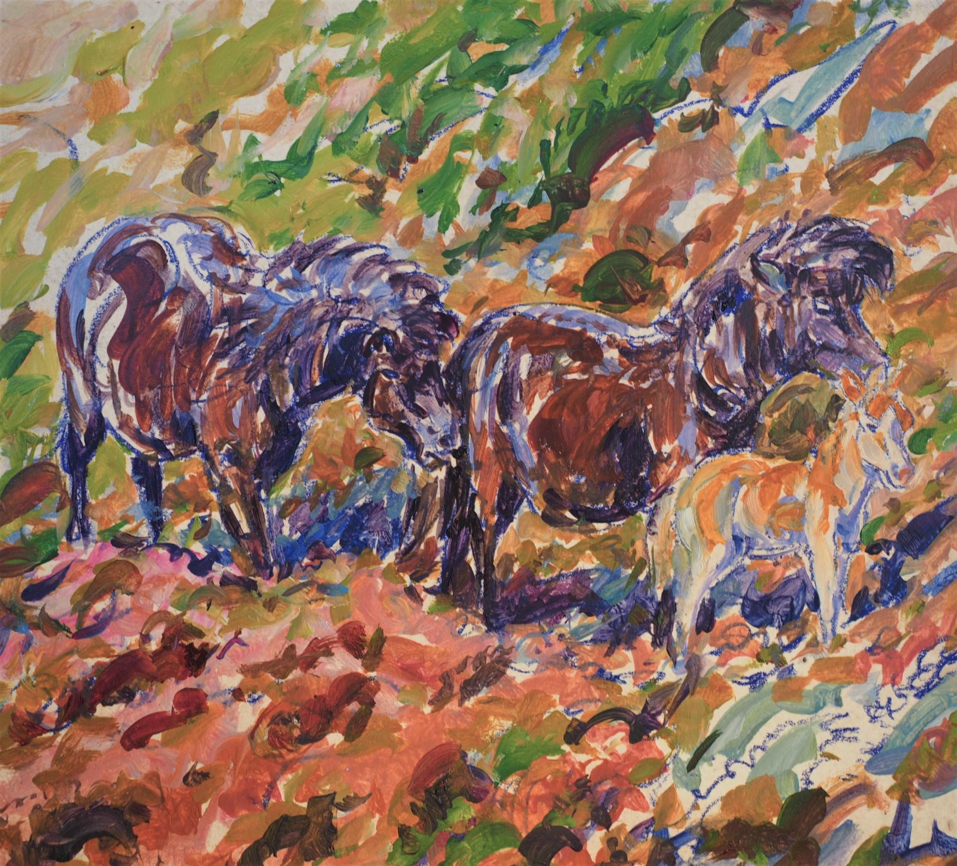 Eriskay Ponies and Hen Harrier