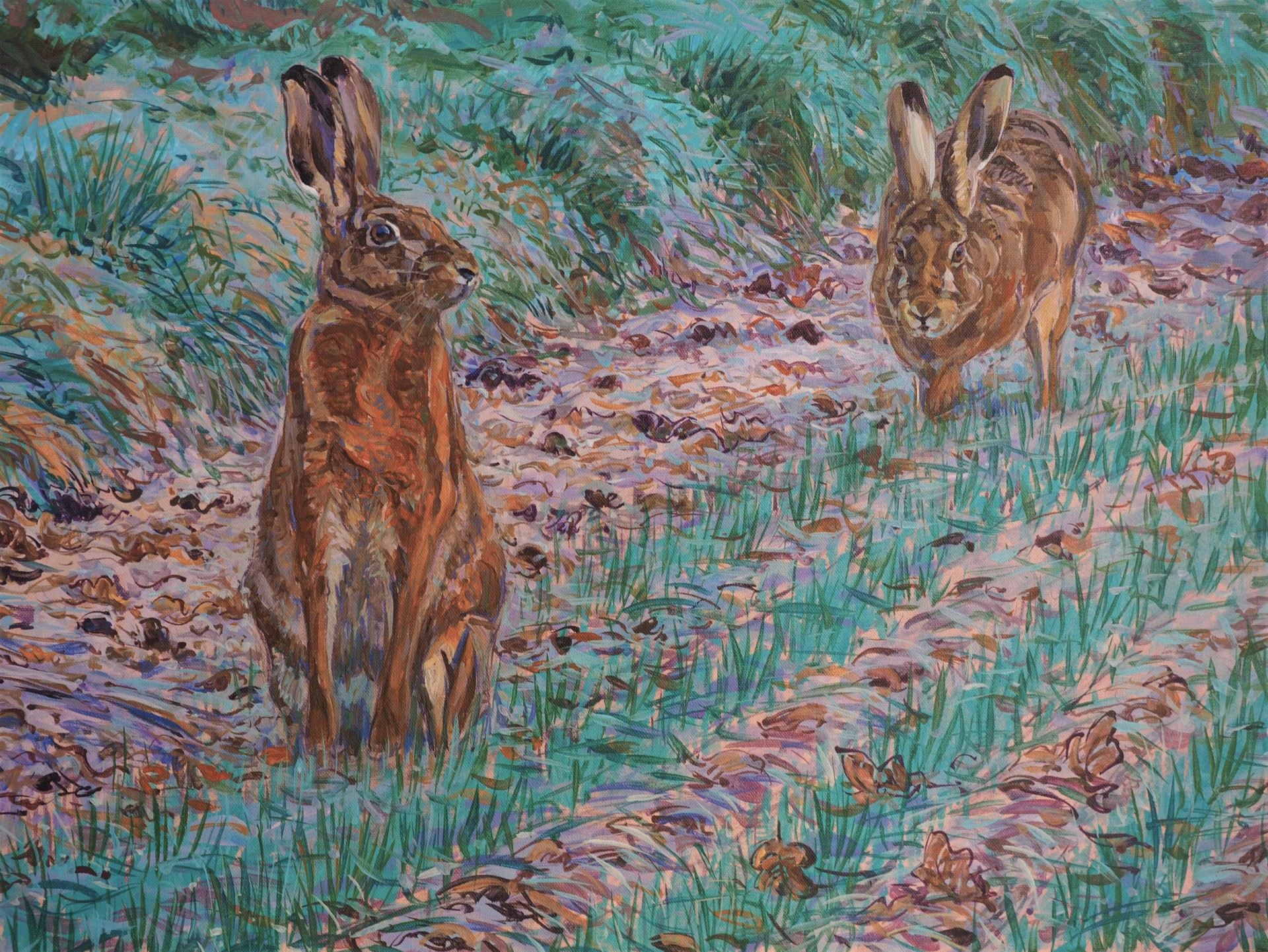 Frosty Morning Hares