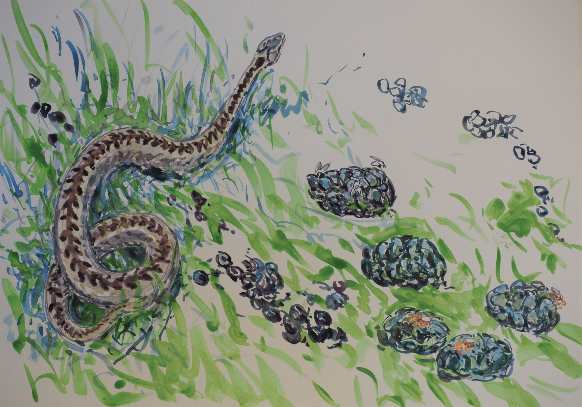 Adder and Flies on Sheep droppings