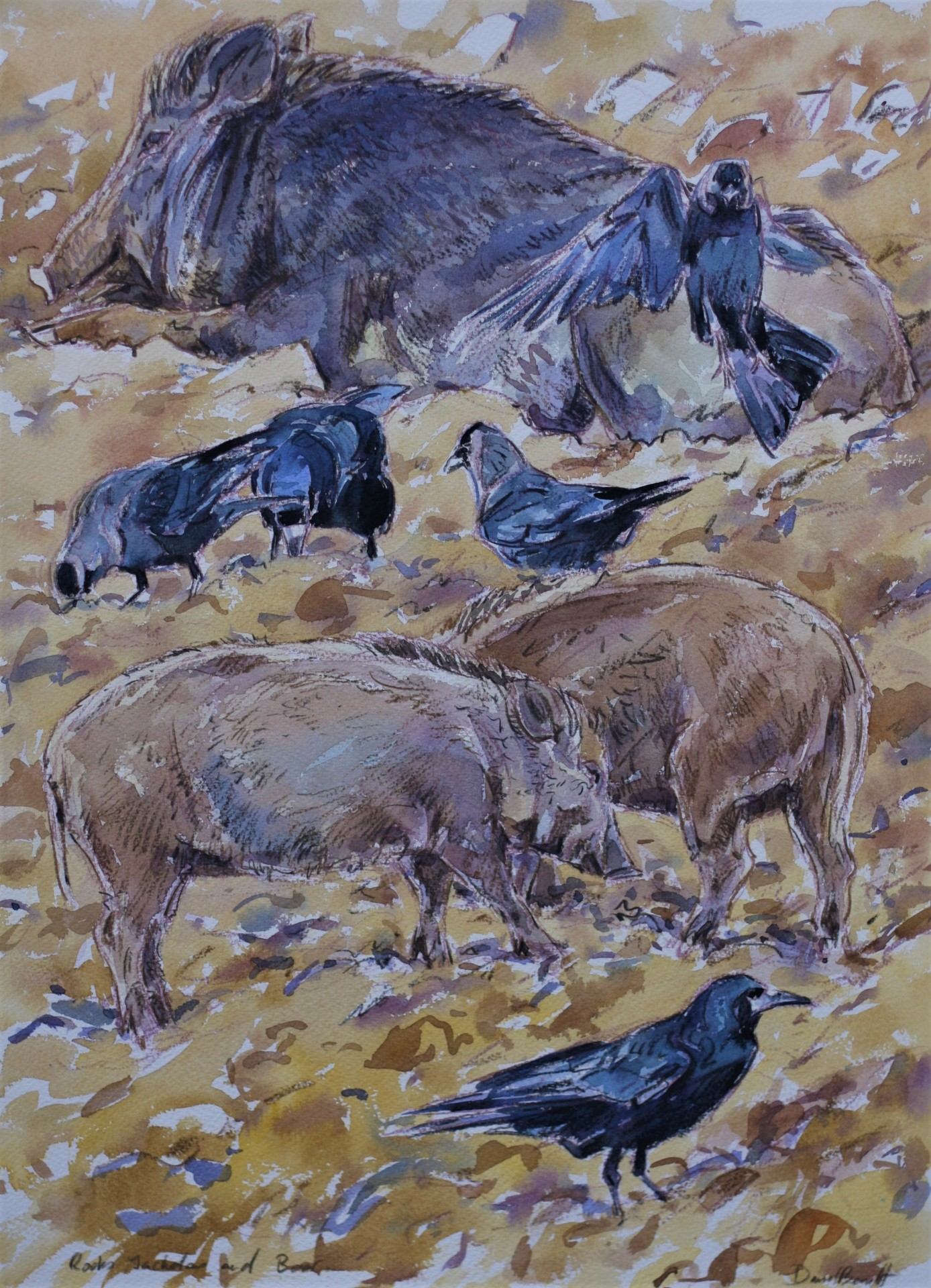 Wild Boar and Rooks