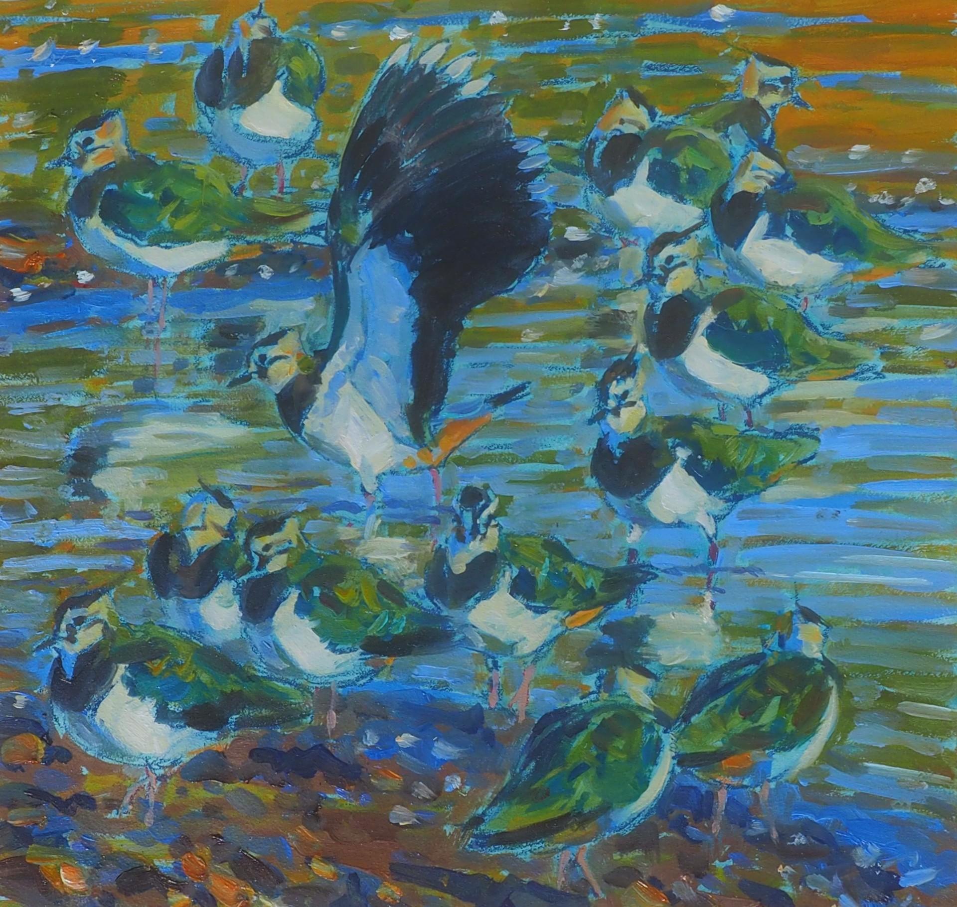 Lapwings alighting, North Staveley Wetlands.