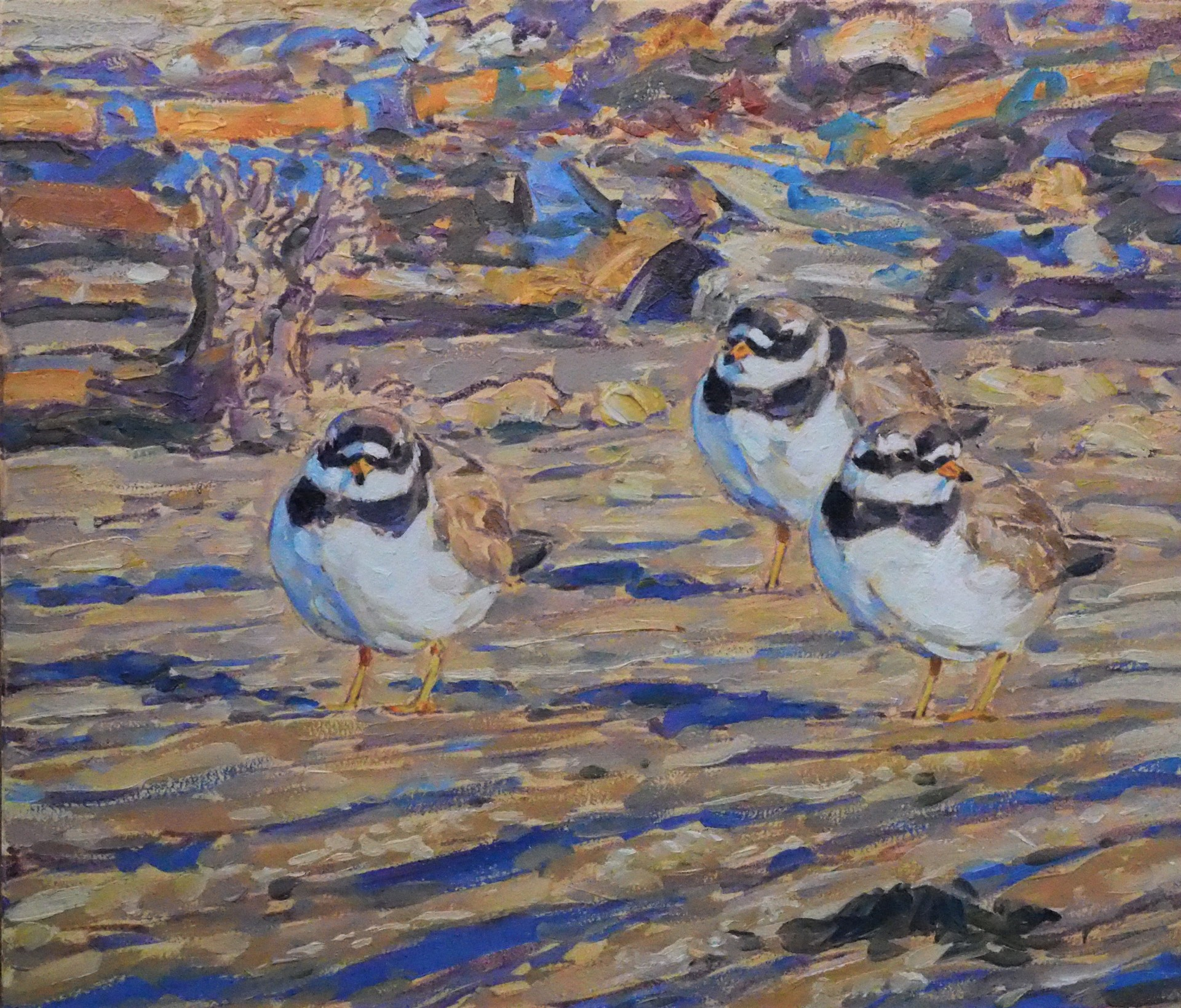 Ringed Plovers and Kelp, Seahouses, Northumberland