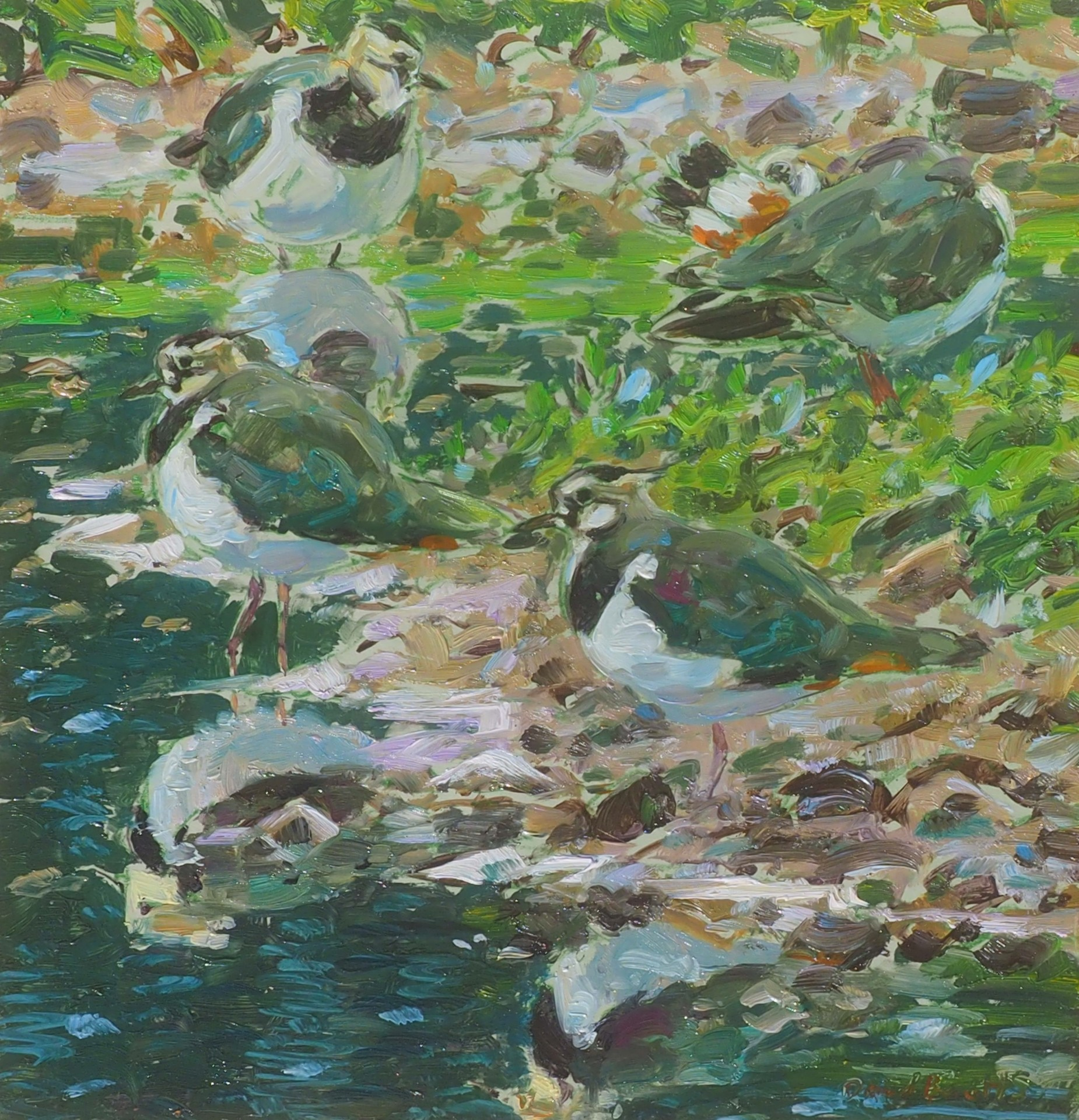 Lapwing Reflections