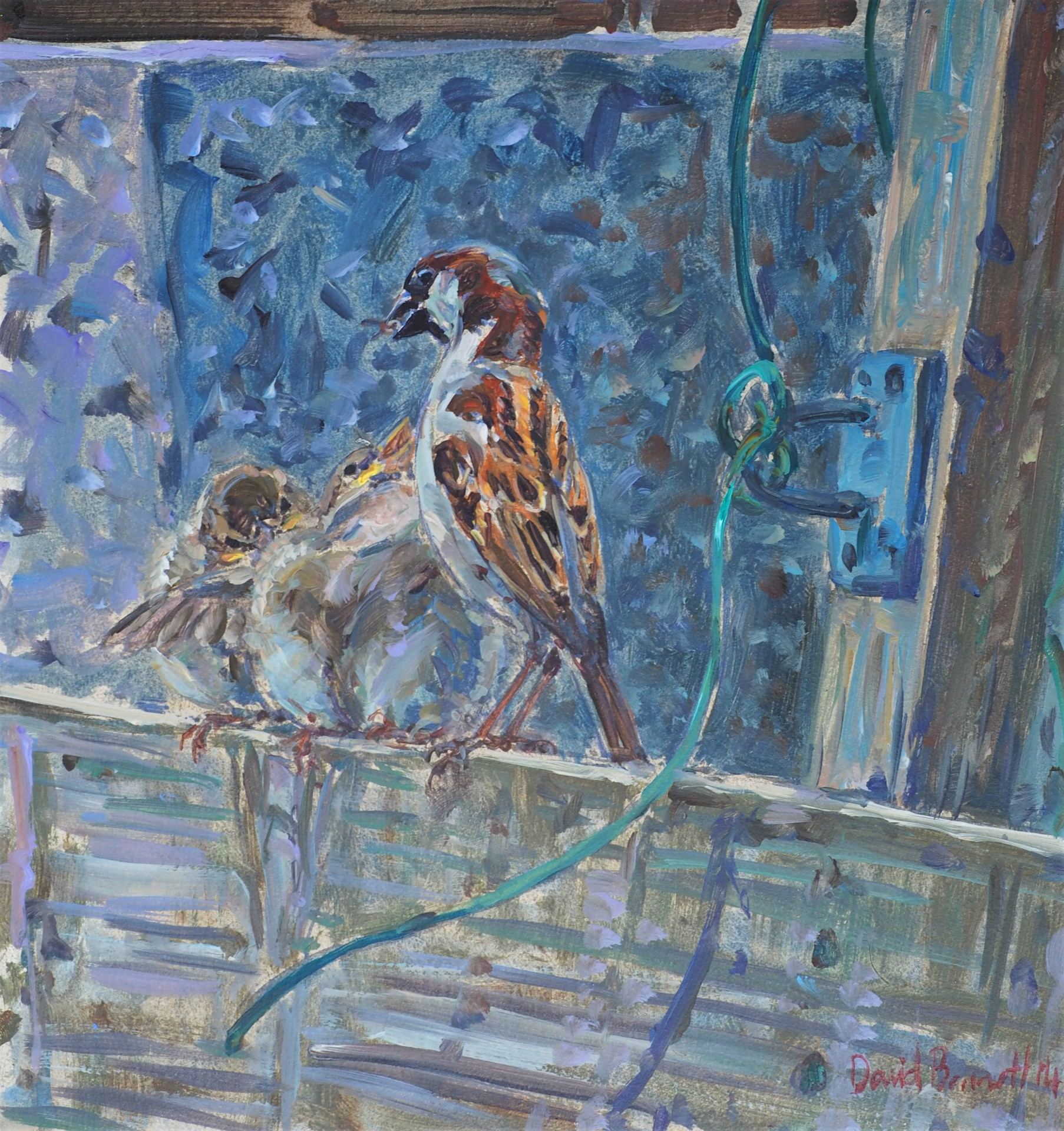 House Sparrows, Starbeck, Harrogate, North Yorkshire