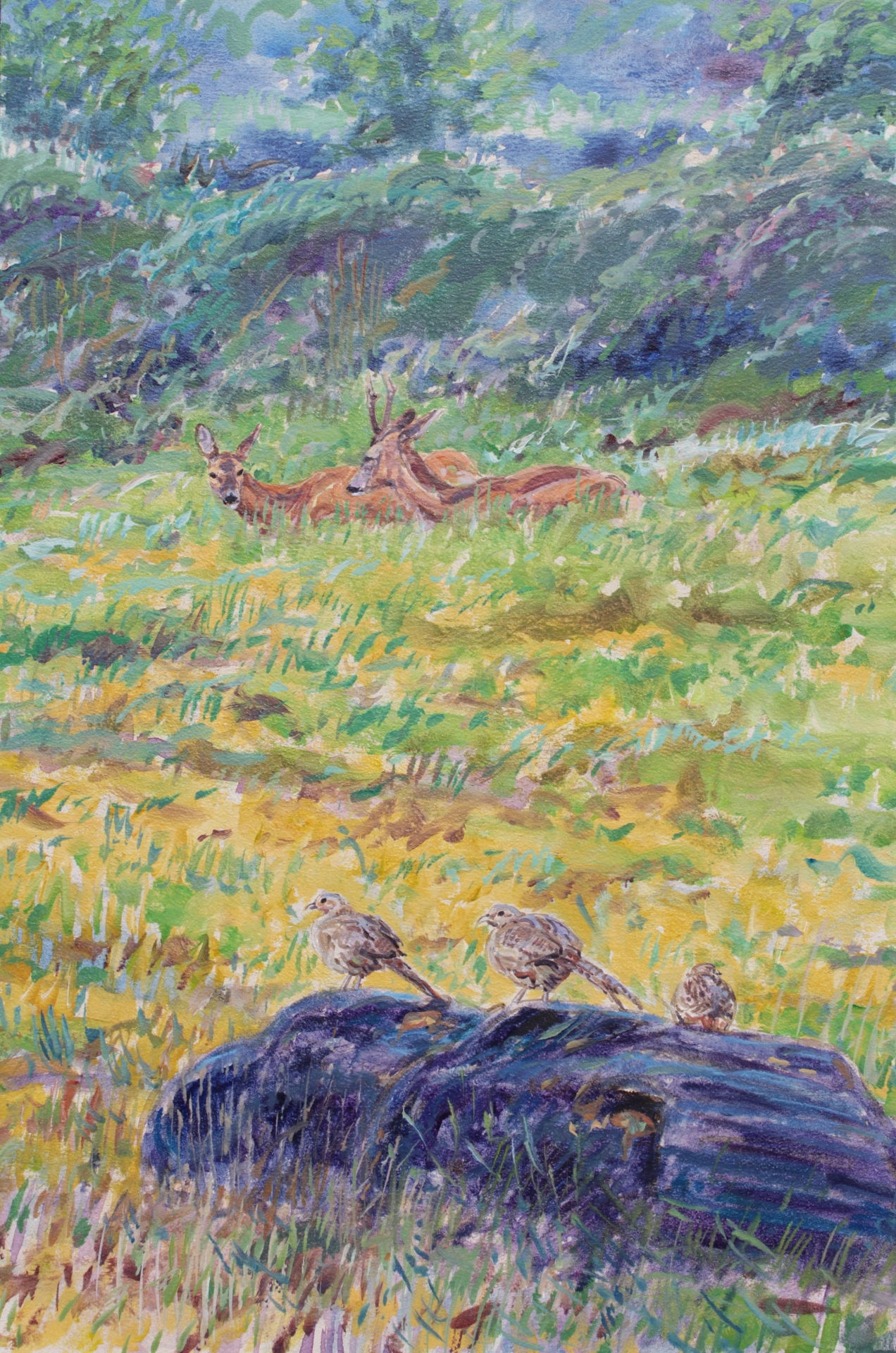 Roe Couple Rutting and Pheasants, Nidd Gorge, North Yorkshire