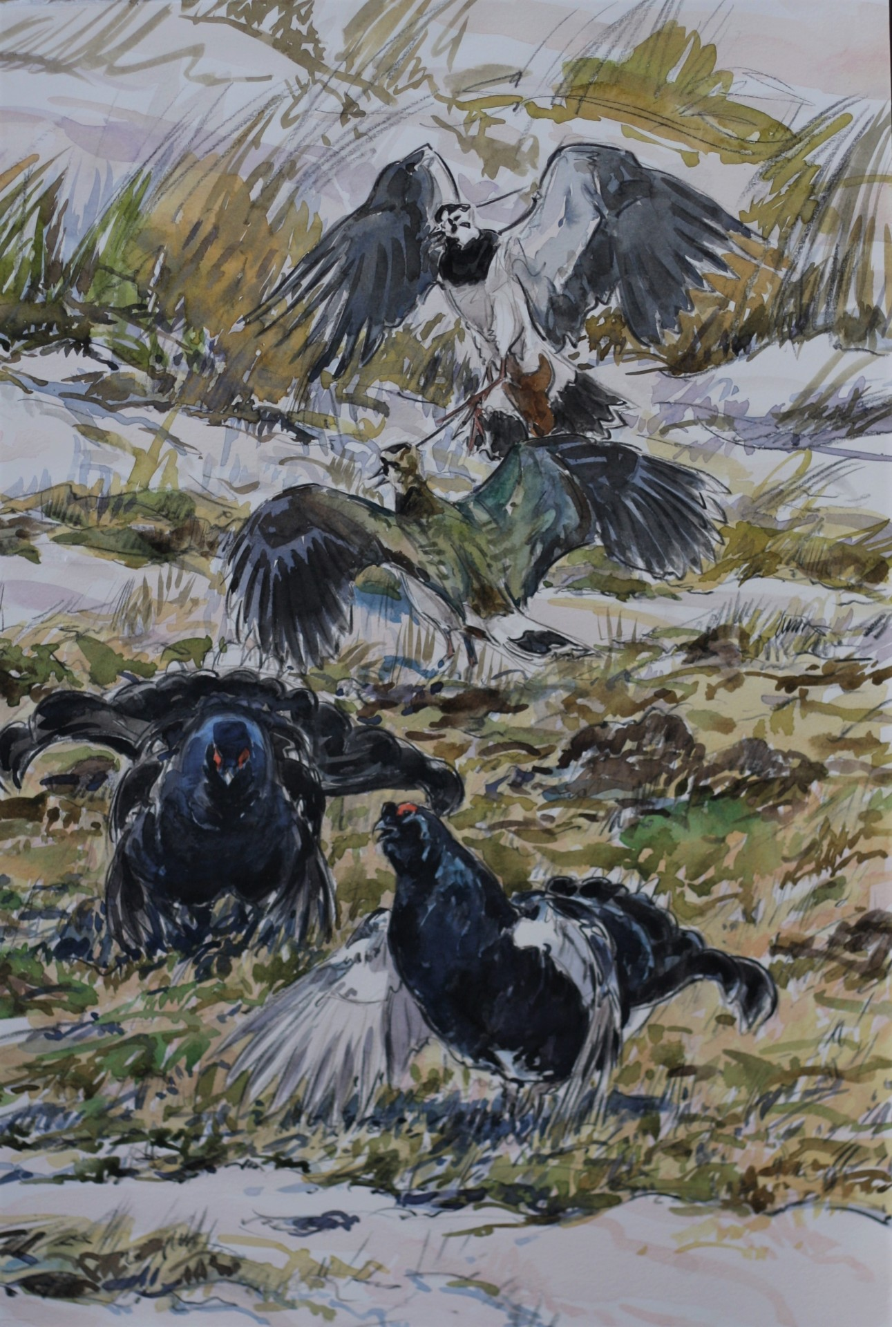 Lapwings and Black Grouse, Teesdale