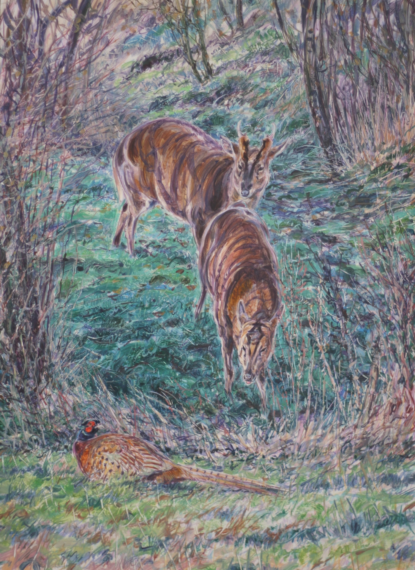Muntjac Deer and Pheasant, Suffolk