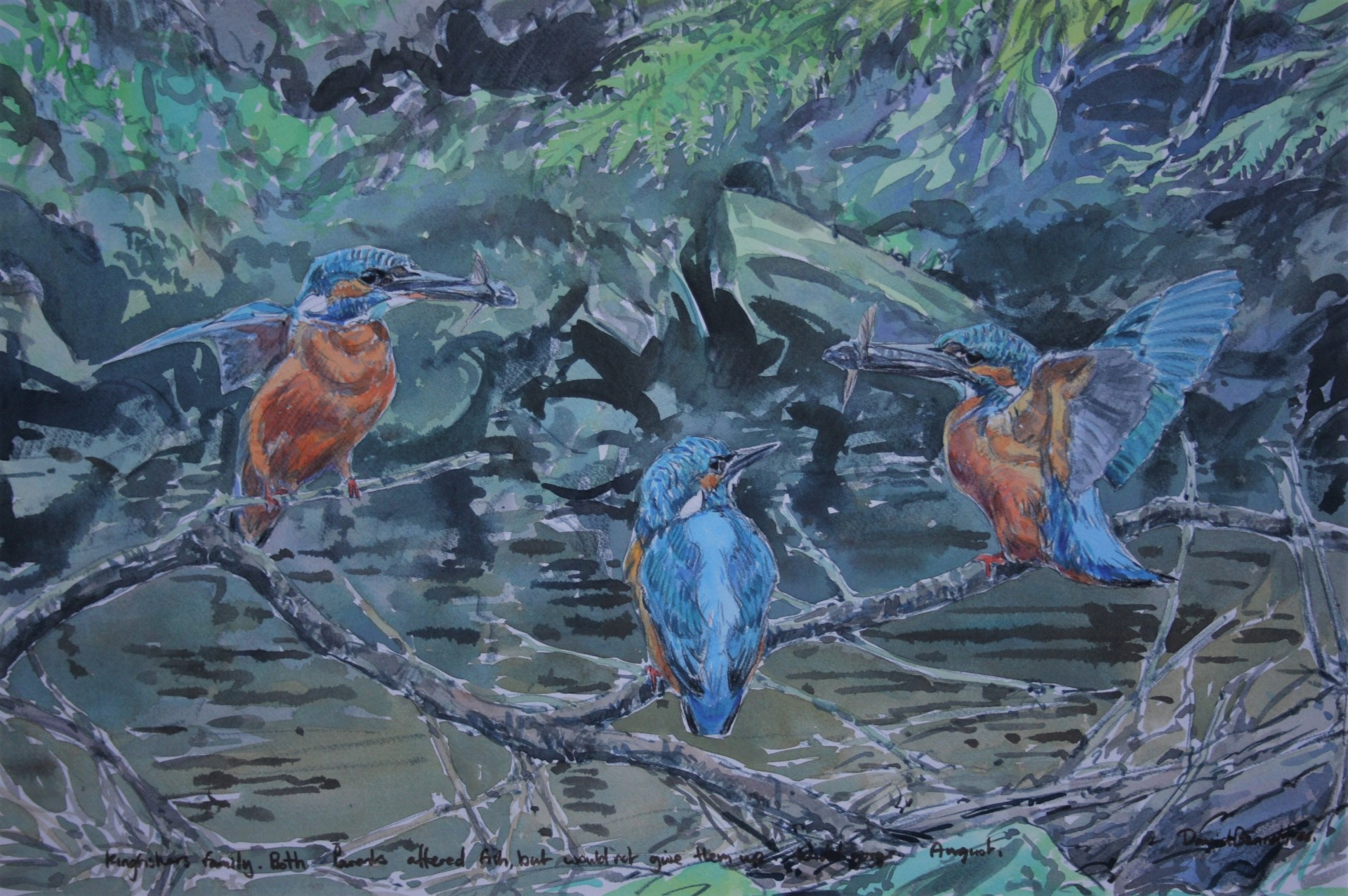 Kingfisher Family, River Nidd
