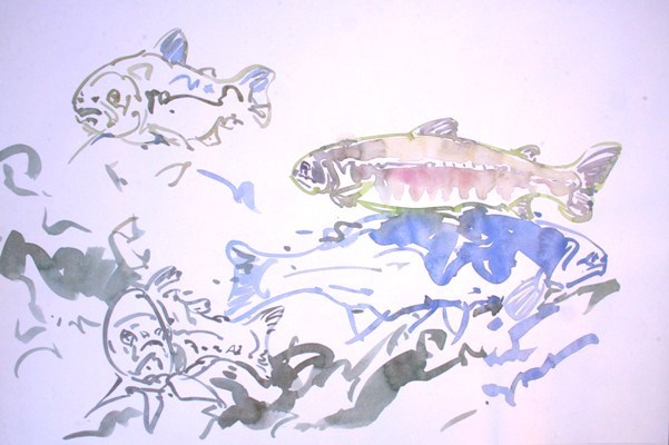 Sea Trout Studies