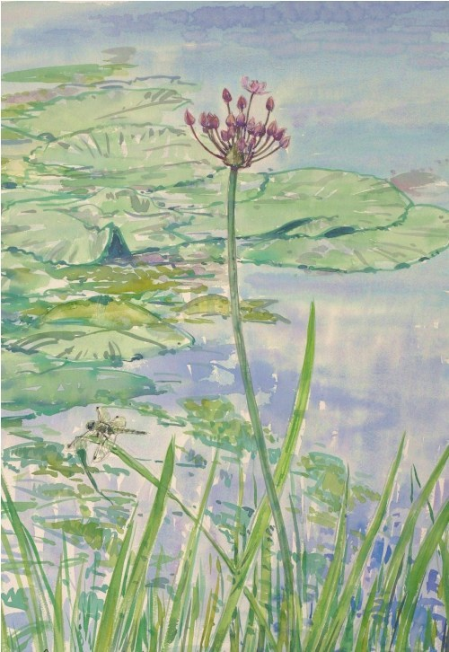 Flowering Rush and Broad Bodied Skimmer