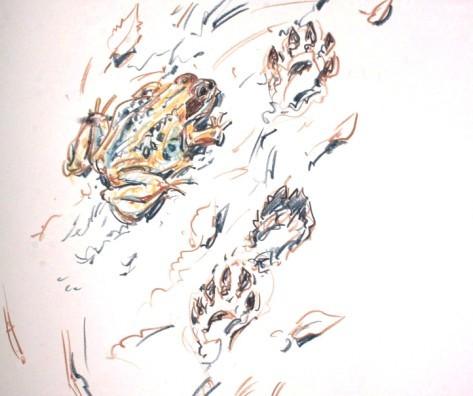 Butterfish Studies, Mull