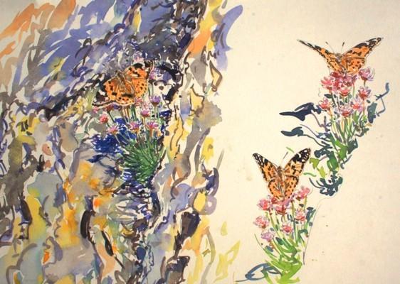 Painted lady Studies