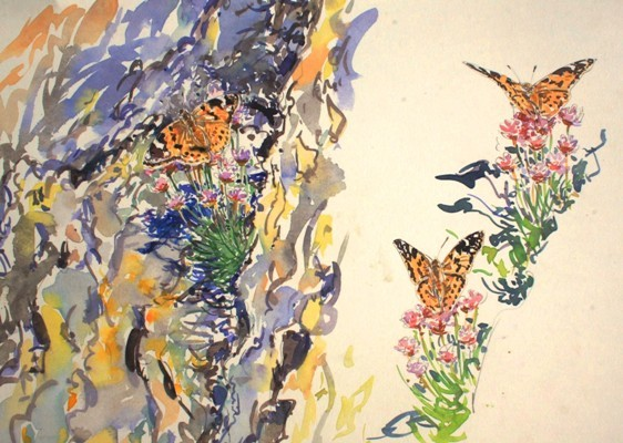 Painted lady Studies