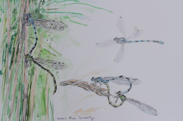 Damselfly Studies