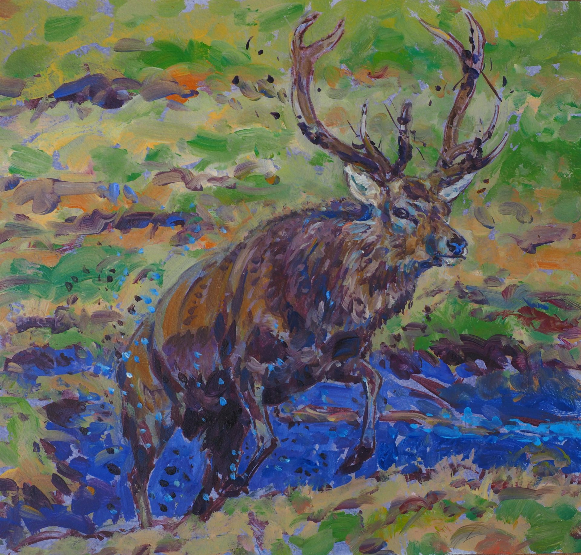 Red Stag emerging from a Wallow